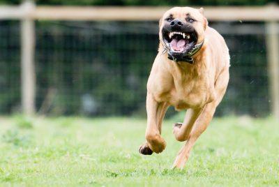 feature-dog-bite-injury