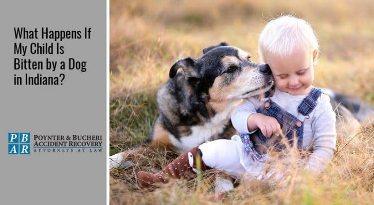 What Happens If My Child Is Bitten by a Dog in Indiana?